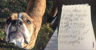 Dieser Junge gibt dem Tierheim eine Anleitung für seinen Hund