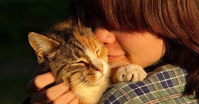Gibt es wirklich Katzen- und Hundemenschen?