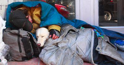 So unterstützt Tierschutzorganisation Obdachlose mit Haustieren