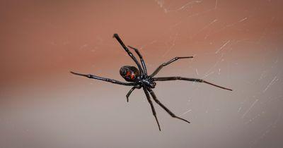 Das passiert wirklich, wenn man eine Spinne einsaugt