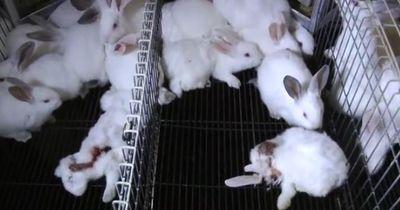 Mit dieser Aktion wollen Tierschützer ein neues Gesetz erzwingen