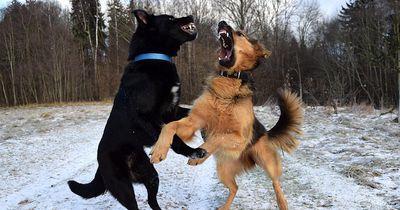 Das kann man tun, wenn es zum Streit zwischen Hunden kommt
