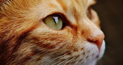Nach brutalen Misshandlungen ist diese Katze gestorben