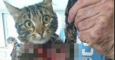 Deshalb können Halsbänder eine Todesfalle für Katzen sein