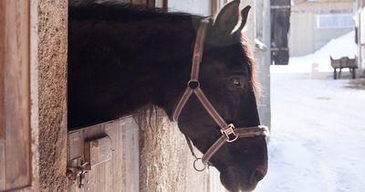 Pferd wird von Tierhasser schwer verletzt