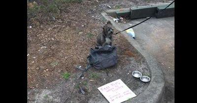 Warum dieser Hund ausgesetzt wurde, ist nicht zu fassen: