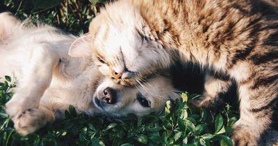 Diese unsichtbare Gefahr droht jetzt unseren Haustieren: