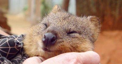 Das sind die glücklichsten Tiere der Welt: