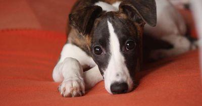 Hundebesitzer lassen ihren Liebling bei einem Hundesitter