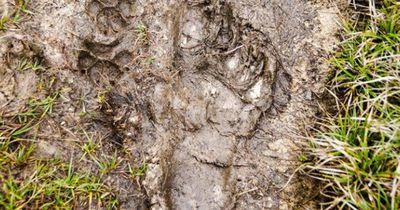 Unglaublich: Ältester und seltenster Hund der Welt wiederentdeckt