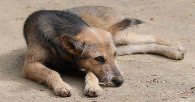 Das ist der dankbarste Hund der Welt