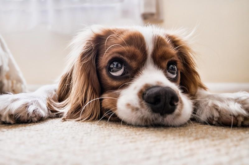 Abgebildet ist ein Hund und es geht um Kokos-Öl bei Hunden.