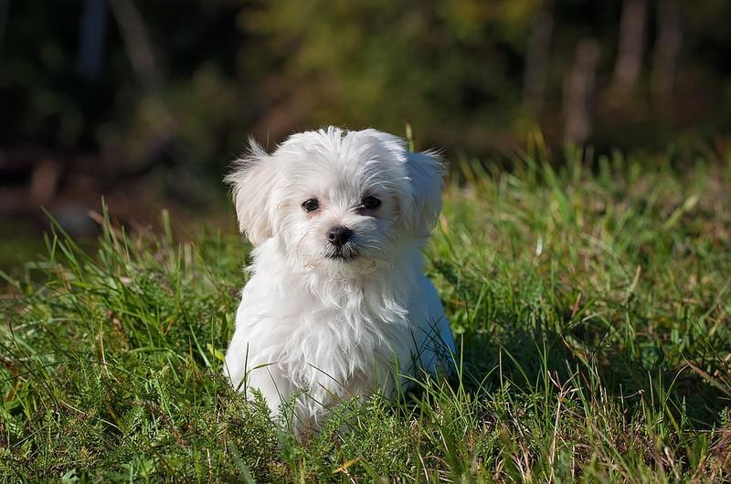 Auf dem Bild ist ein Hund und es geht um Kokos-Öl bei Hunden.