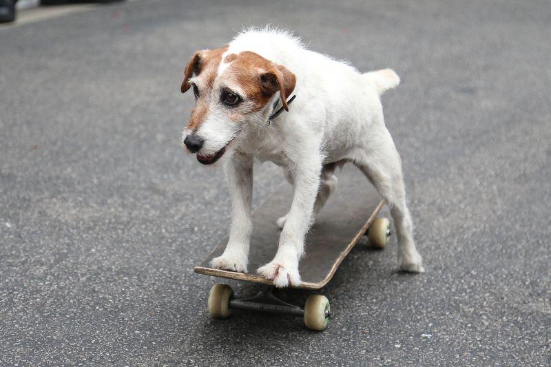 Ein Hund ist abgebildet und es geht um die Vorteile von Kokos-Öl bei Hunden.