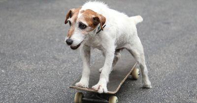 Kokosnuss-Öl: Wie gut ist es für Hunde?