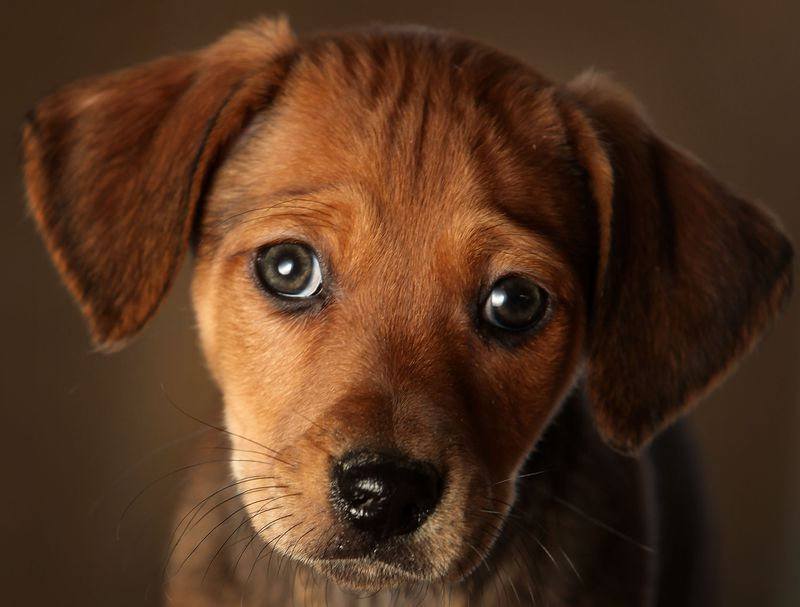 Zu sehen ist ein Hund und es geht um Kokos-Öl für Hunde.