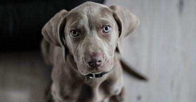 Diese Fotos von Hunden, die gerade adoptiert wurden, retten dir garantiert den Tag