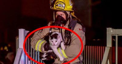 Katze rettet Familie das Leben
