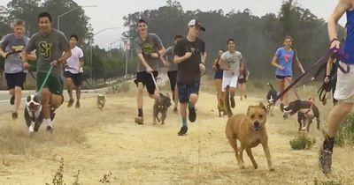 Crosslauf-Team nimmt ausgesetzte Hunde mit zum Sport