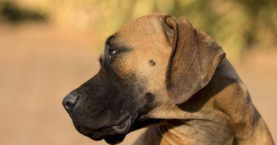 Als sein Besitzer ihm verbietet in den Pool zu gehen, macht dieser Hund DAS!
