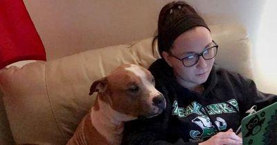 Eine Frau rettet Pitbull aus dem Tierheim und wird zu Hause überrascht