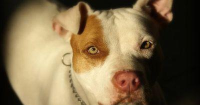 Diese Fotos zeigen, was für gute Seelen Pitbulls sind