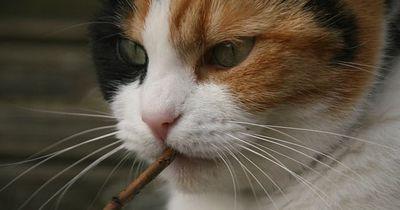 Diese 8 Fotos zeigen, dass wir Katzen nicht verdient haben