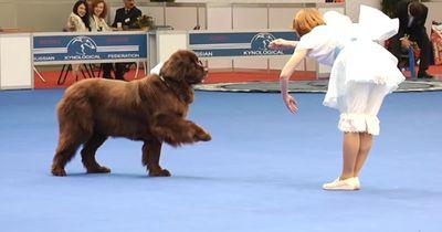 Als dieser Hund und seine Besitzerin die Bühne betreten verschlägt es allen den Atem