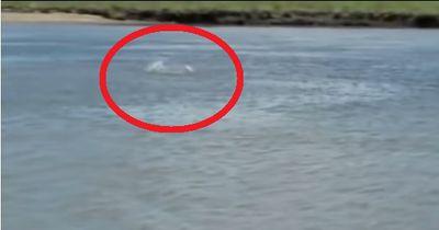Hier wurde ein rosa Delfin gesichtet