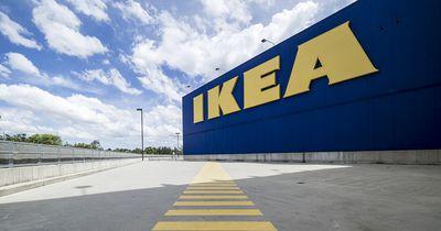 Das hat Ikea nun für Tierheimkatzen gemacht