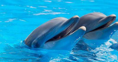 Endlich! Hier sind reisende Delfin-Shows bald verboten