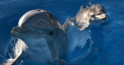 Erfolg für alle Delfin-Freunde