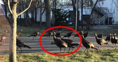 Boston hat ein tierisches Problem