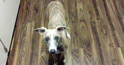 Diese neun Geräusche kennt jeder Hundehalter