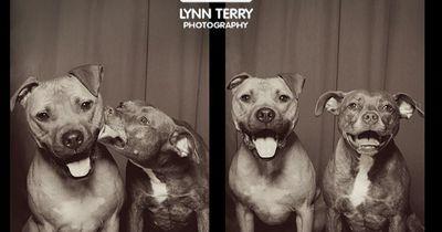 Hunde zeigen perfekte Pose in Fotobox