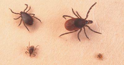 Zecken: Drei Tipps gegen die Insekten