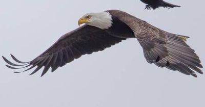 Dieses Foto von einem Adler und einer Krähe ist einzigartig