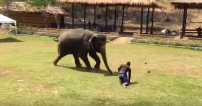 Heldenhafter Elefanten-Einsatz