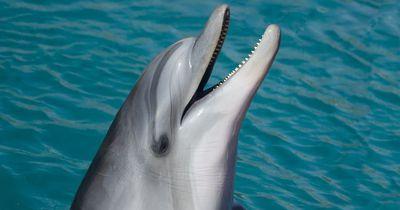 Sensation: Haltungsverbot für Delfine und Orcas in Frankreich