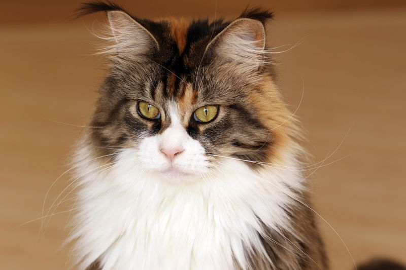 Katze krebs lebenserwartung