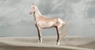 Ist das das schönste Pferd auf der Welt?