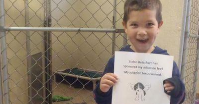 Dieser Junge geht ins Tierheim um einen Hund zu adoptieren und macht dann das..