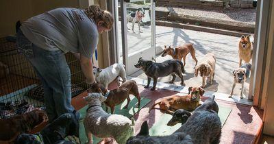 Sie adoptierte 45 alte Hunde - und der Grund dafür bricht dir das Herz