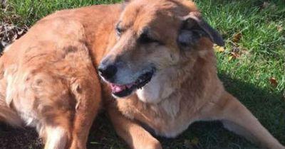 Ihr Hund starb - doch er sendete ihnen noch eine Nachricht