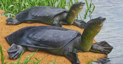 Von dieser Schildkrötenart gibt es nur noch 3 Tiere...