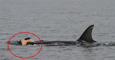 Zu dieser Emotion sind Wale wohl fähig