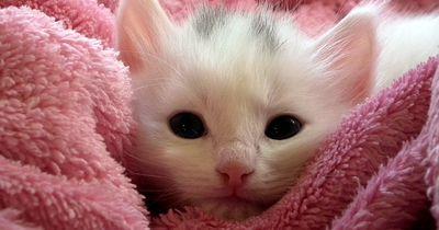 So werden Kätzchen schnell zu Familientieren