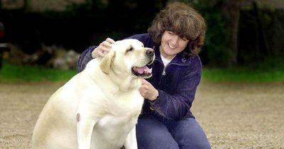Hundehilfe: Das musst du tun, wenn dein Tier leidet!