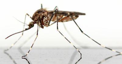 Sommerzeit ist Mückenzeit