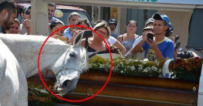 Dieses Pferd gibt seinem besten Freund das letzte Geleit